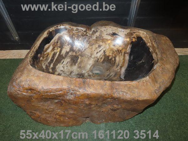 waskom hout versteend