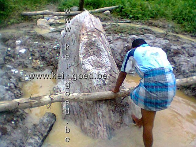 versteend hout delfen