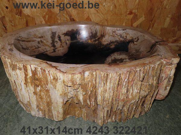 waskom versteend hout een fossiel