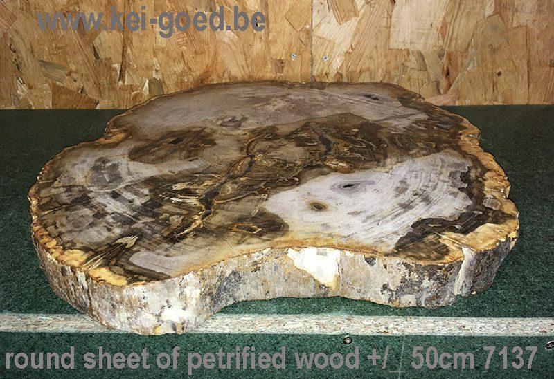 bruin rond blad van versteend hout