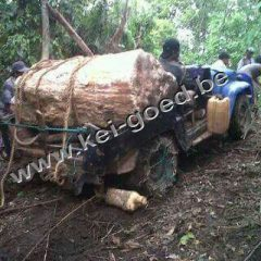 versteend hout voor transport