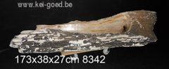 trogs van versteend hout