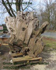 Grote erosie houten wortel