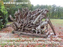 Decoratieve Oeroude gigantische wortel