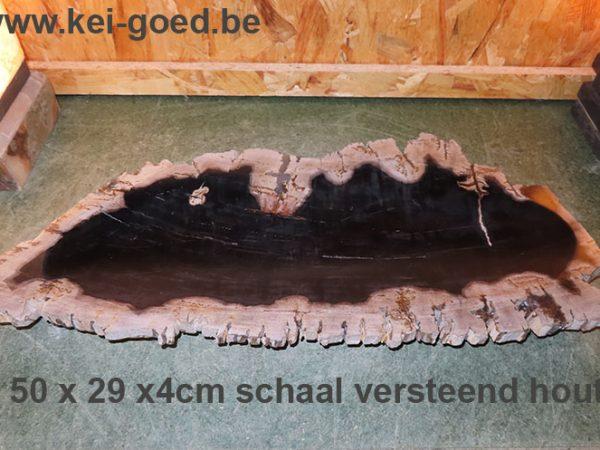 schaal van versteend hout